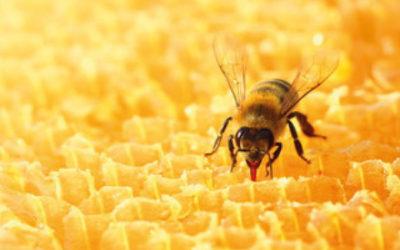 Unsere neue Abteilung: der COSACK-Bienenstock