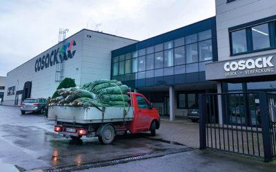 Weihnachtsbäume für alle Cosack-Mitarbeiter